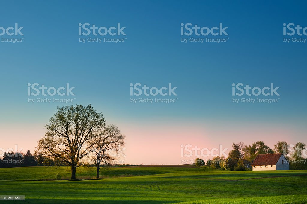 Spring landscape with oaks stock photo