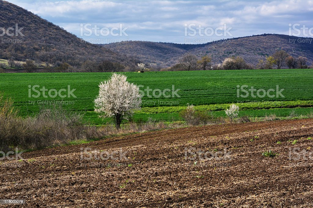 Spring Landscape with ploughed field stock photo