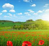 Spring landscape with poppy field