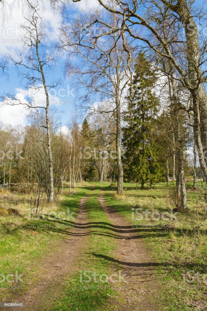 Spring landscapes with a path through the pasture stock photo