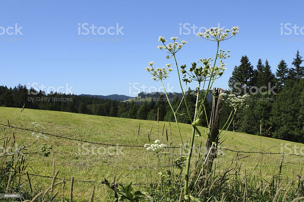 Spring lanscape in Jura, France stock photo