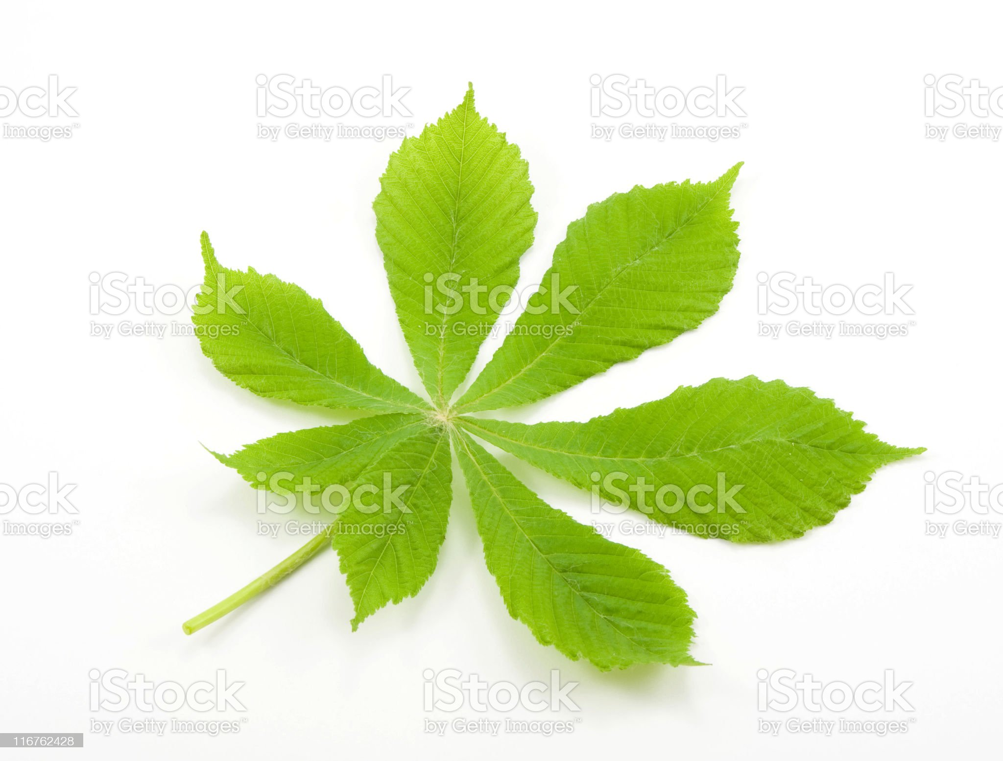 Spring leaf royalty-free stock photo