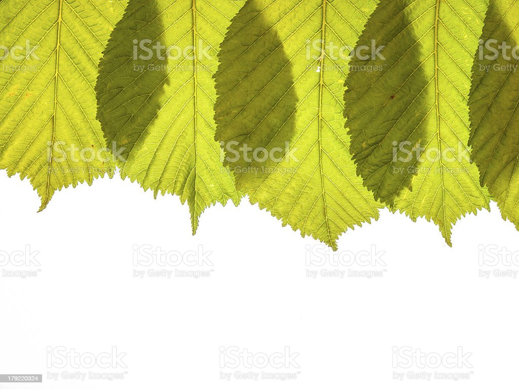 spring leaves arrangment royalty-free stock photo