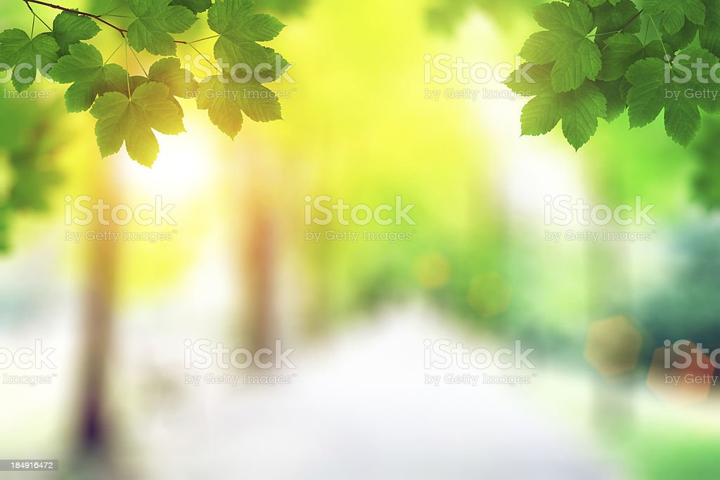 Spring Leaves At Sunset royalty-free stock photo