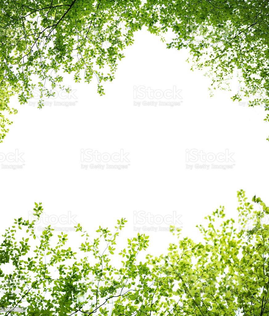 Spring Leaves Frame stock photo