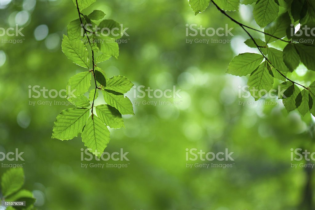 Spring leaves royalty-free stock photo