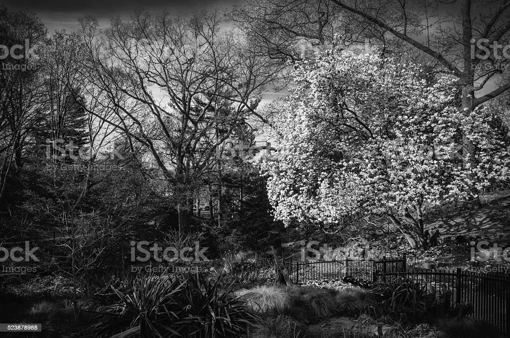 Spring Light In The Garden stock photo