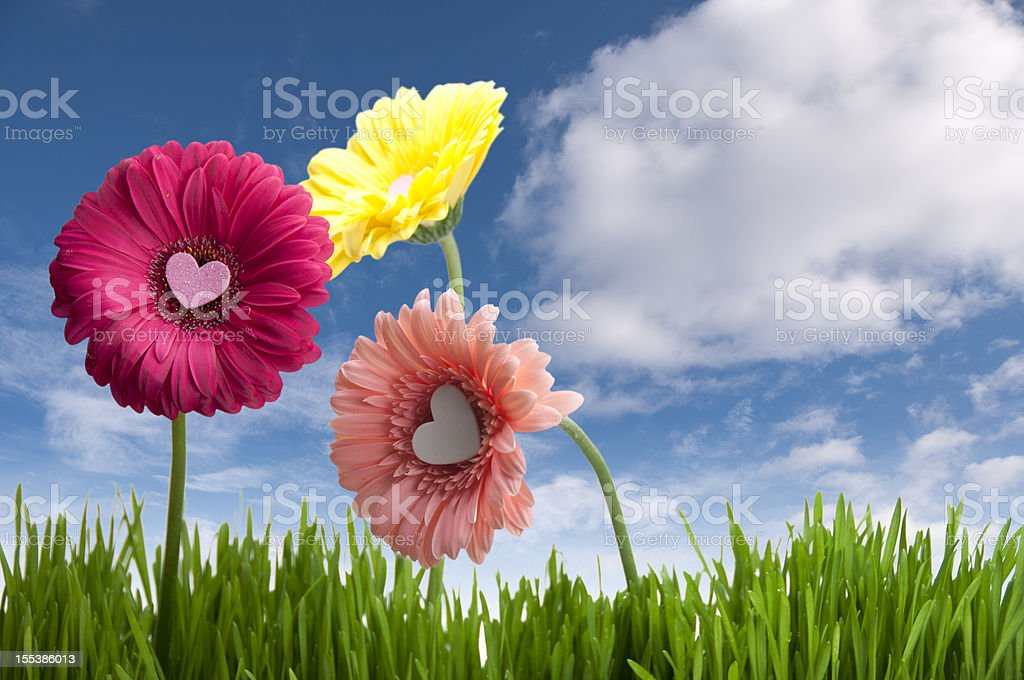 Spring Love royalty-free stock photo
