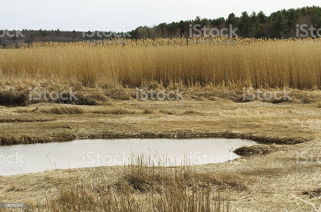 Spring Marsh stock photo