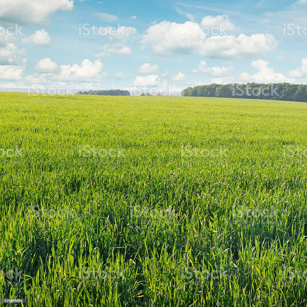 spring meadow and blue sky stock photo