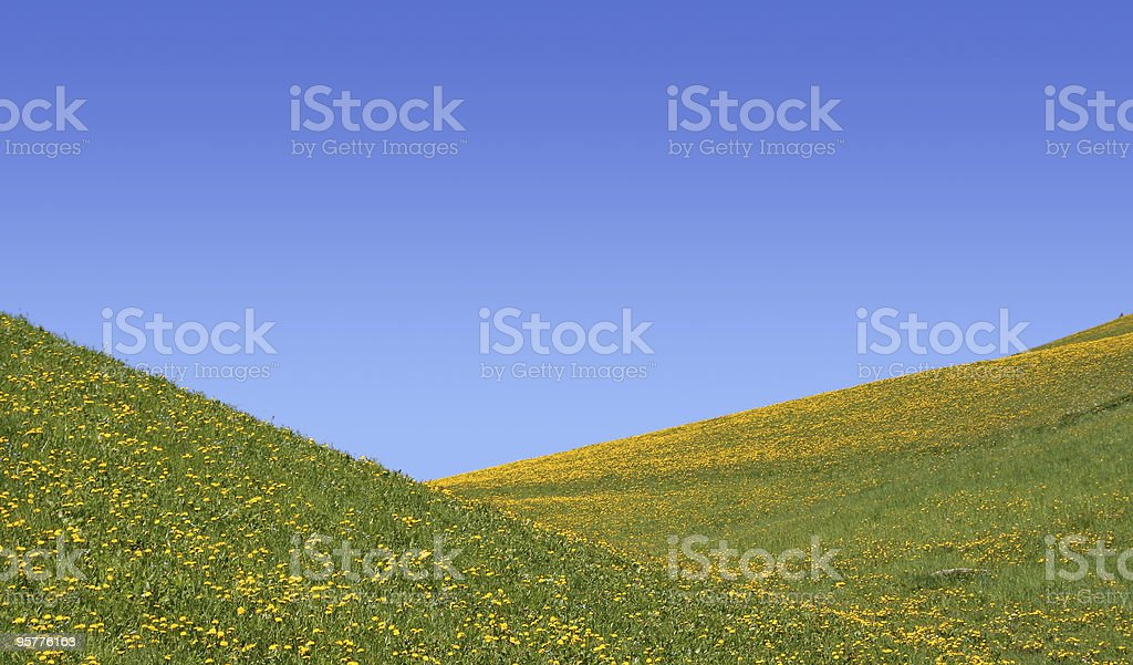 spring meadow and sky royalty-free stock photo
