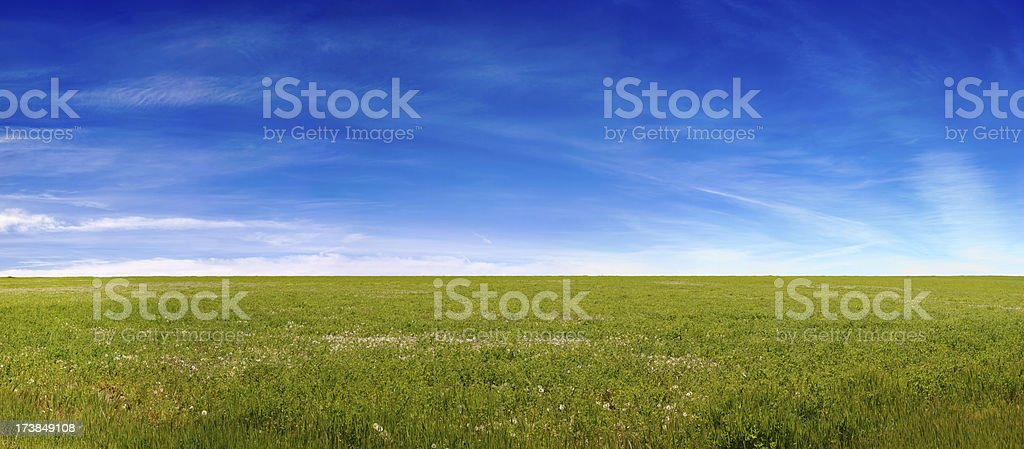 Spring Meadow & Blue Sky royalty-free stock photo