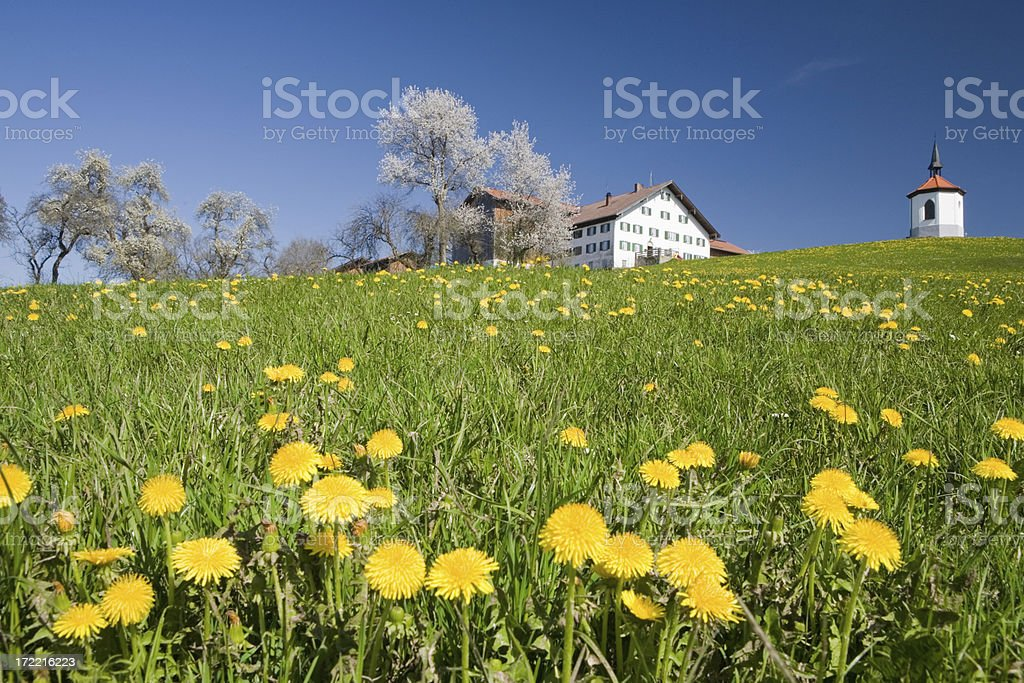 spring meadow III royalty-free stock photo