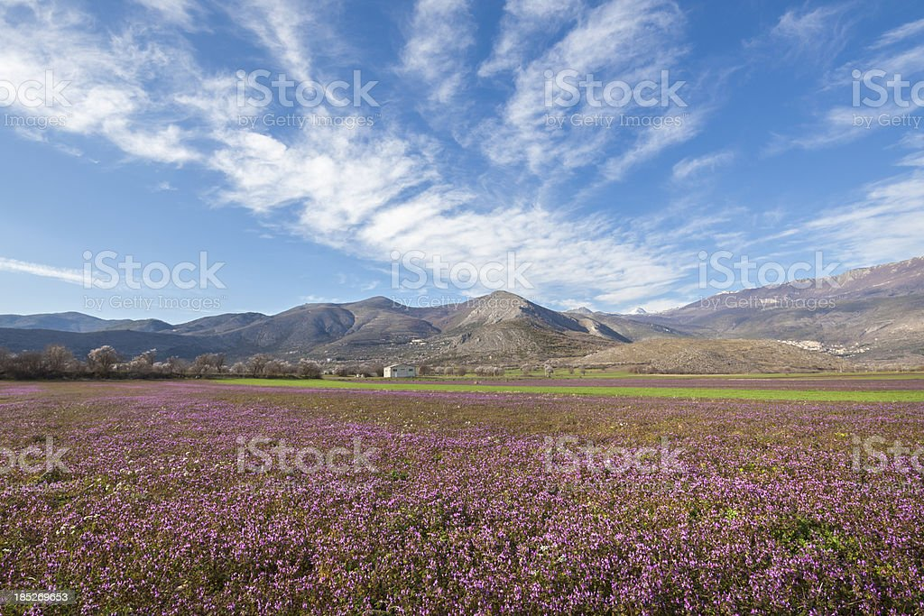 Spring meadow in Abruzzo,  L'Auqila Province Italy royalty-free stock photo