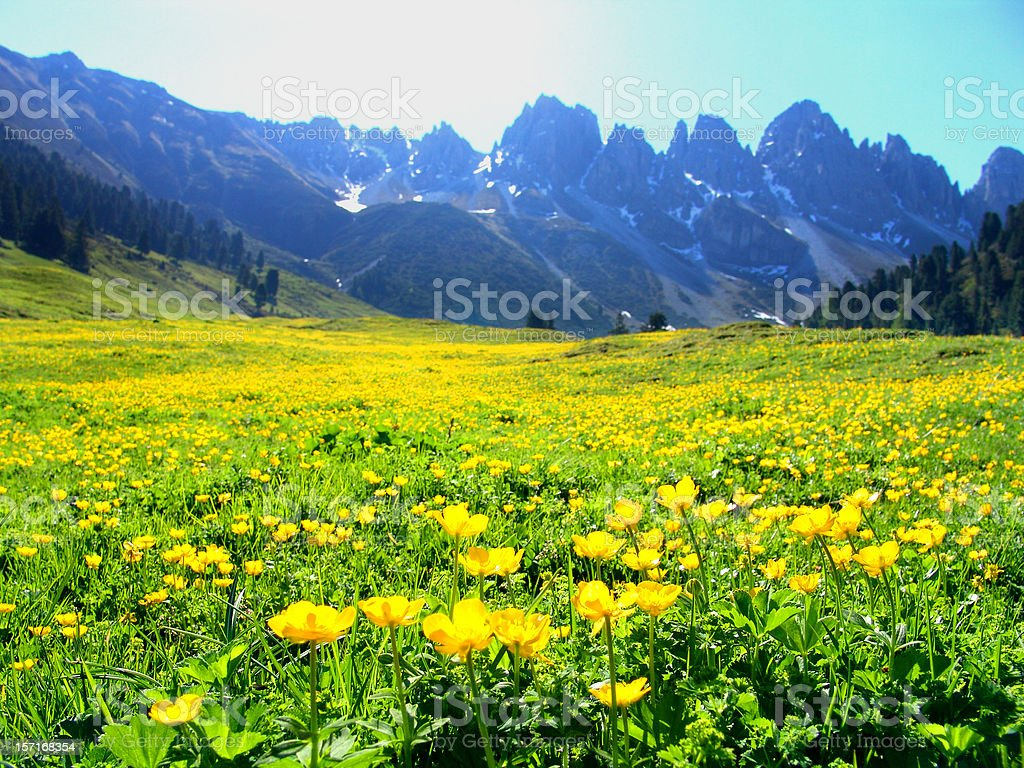 Spring meadow in front of mountains royalty-free stock photo