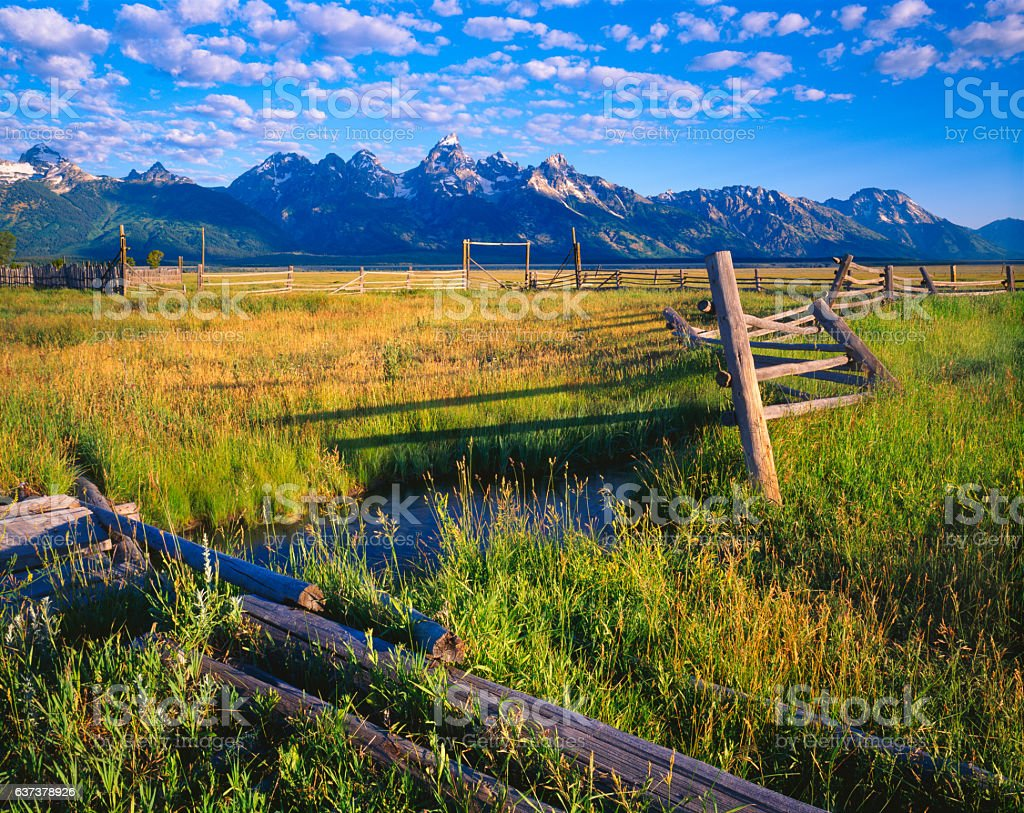 Spring meadow in Grand Tetons National Park,WY (P) stock photo