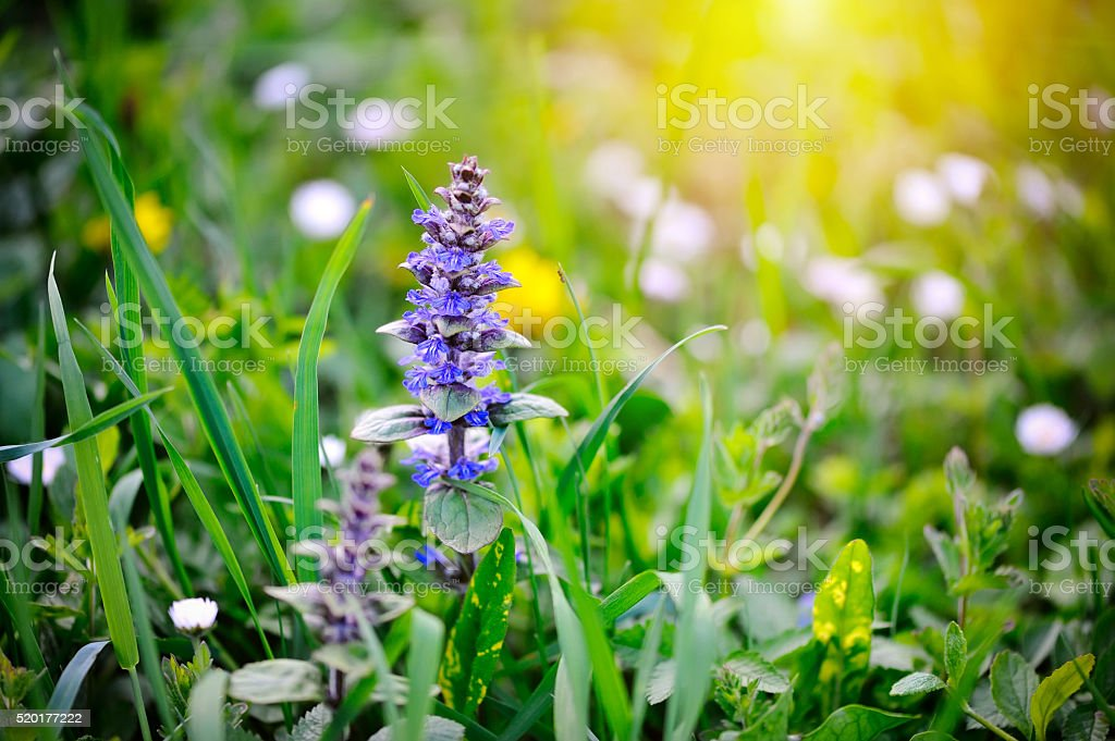 Spring meadow, natural background stock photo