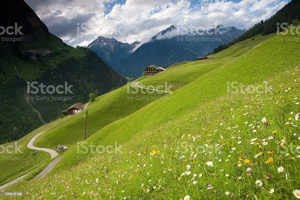 spring meadow near kaisers - tirol austria stock photo