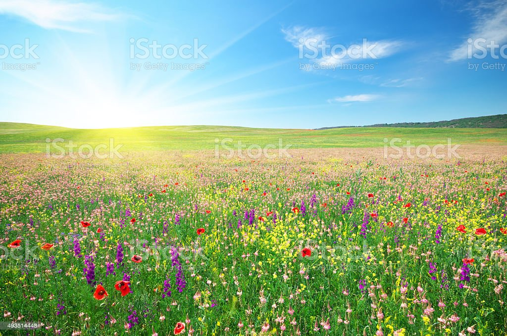Spring meadow of flowers stock photo
