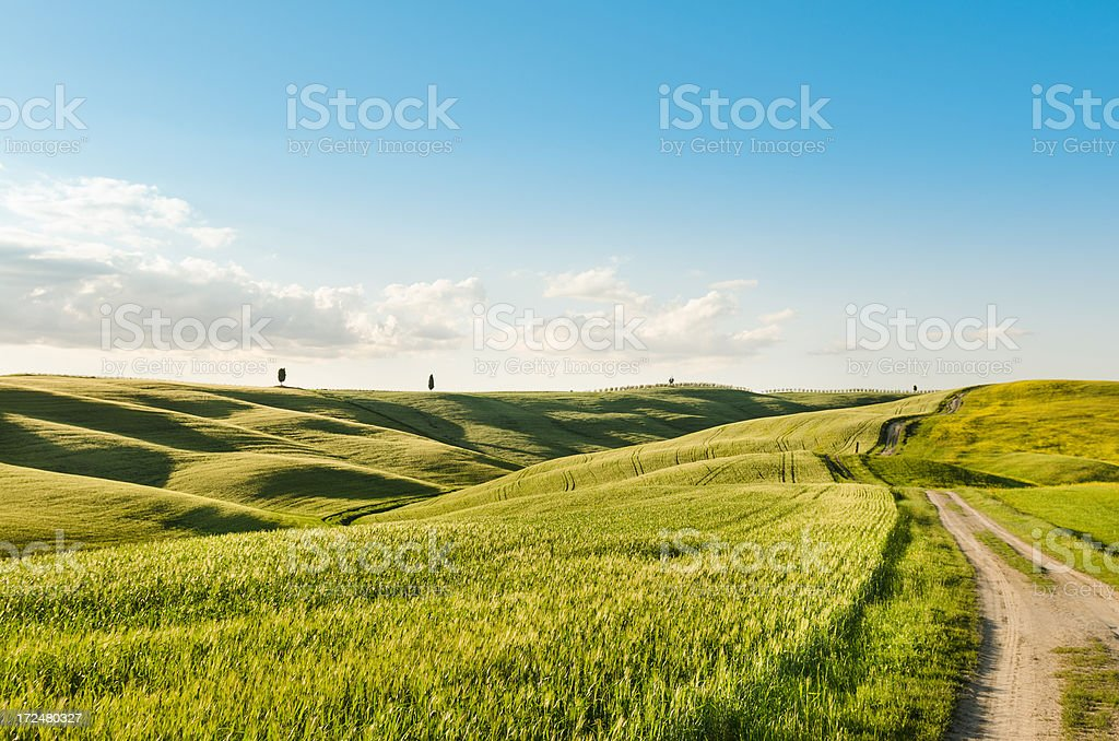Spring meadow on italy stock photo
