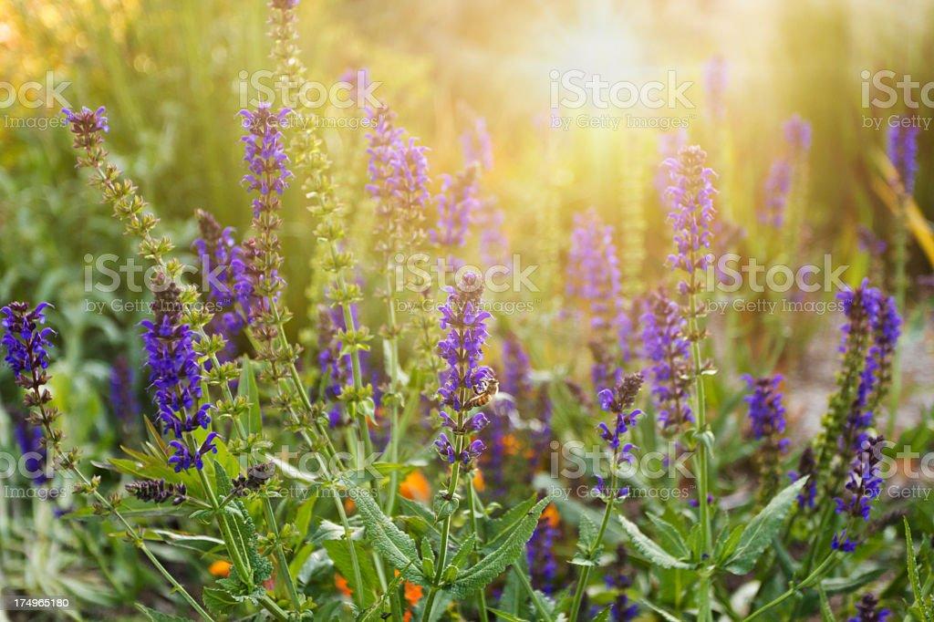 Frühling meadow – Foto