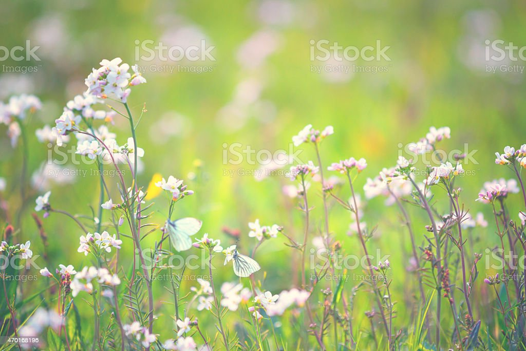 Spring meadow stock photo
