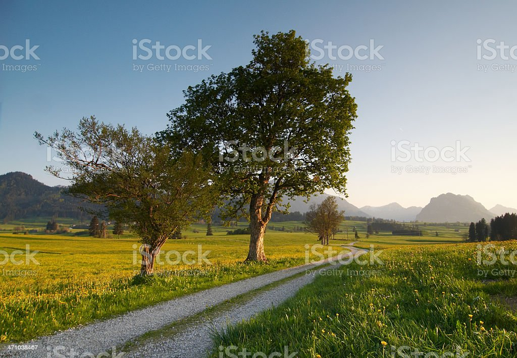 spring meadow royalty-free stock photo