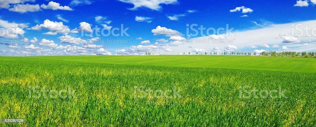 spring meadow stock photo