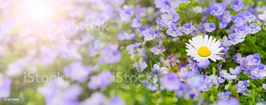 spring meadow with beautiful flowers and sun rays stock photo