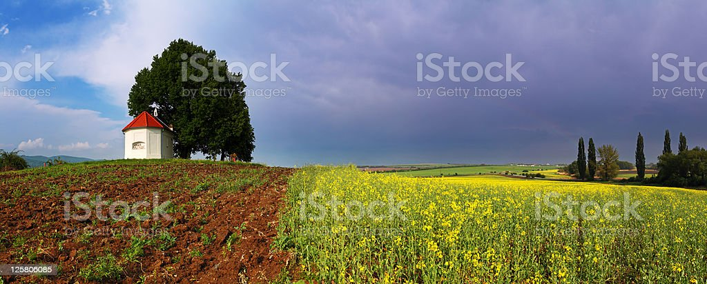 Spring Meadow with blue sky and  yellow flower royalty-free stock photo