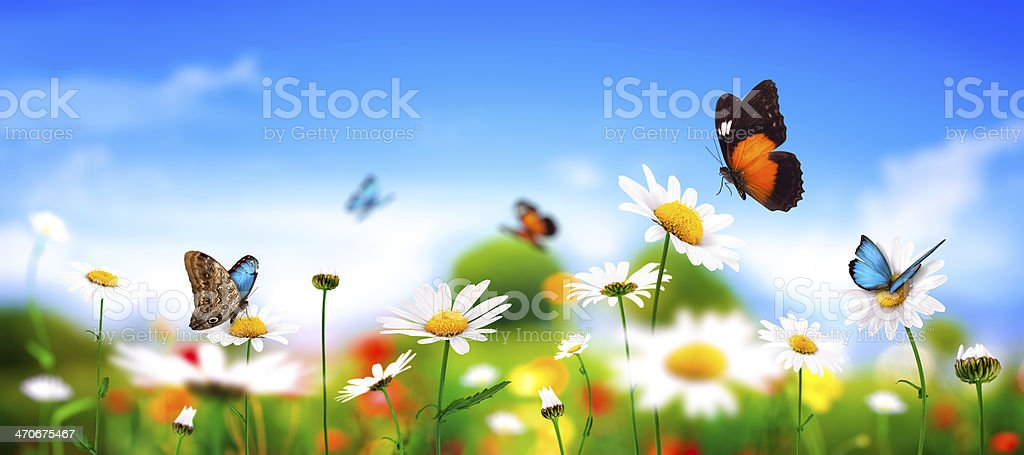 Spring Meadow With Butterflies stock photo
