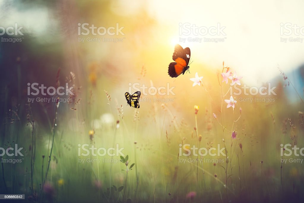 Spring meadow with butterflies at sunset.