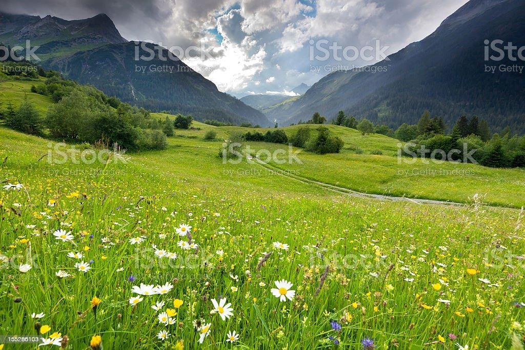 spring meadow with dramatic sky near steeg- tirol austria stock photo