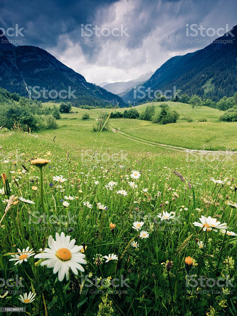 spring meadow with dramatic sky near steeg- tirol austria stock photo