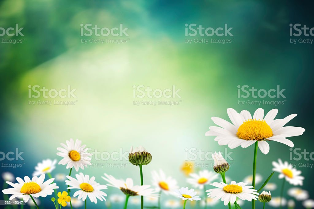Spring Meadow With Flowers stock photo