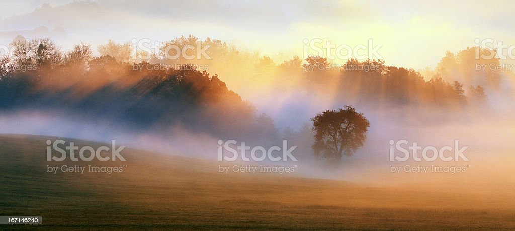 Spring Mist, trees are wet, damp fog of forest stock photo
