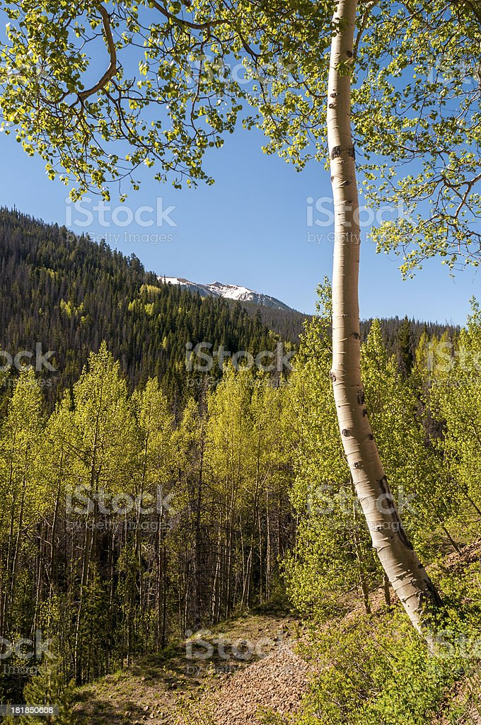 Spring Morning in the Rocky Mountains royalty-free stock photo
