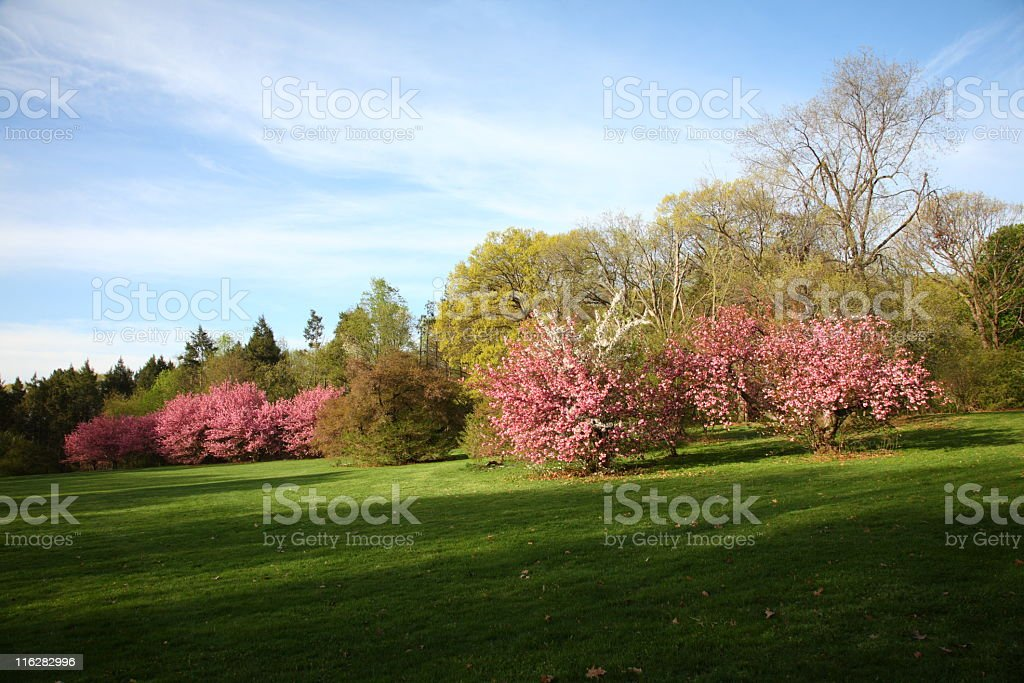 spring morning royalty-free stock photo