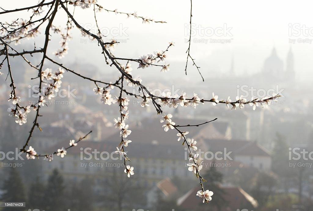 Spring morning stock photo