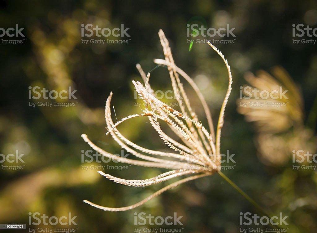 Matin de printemps photo libre de droits