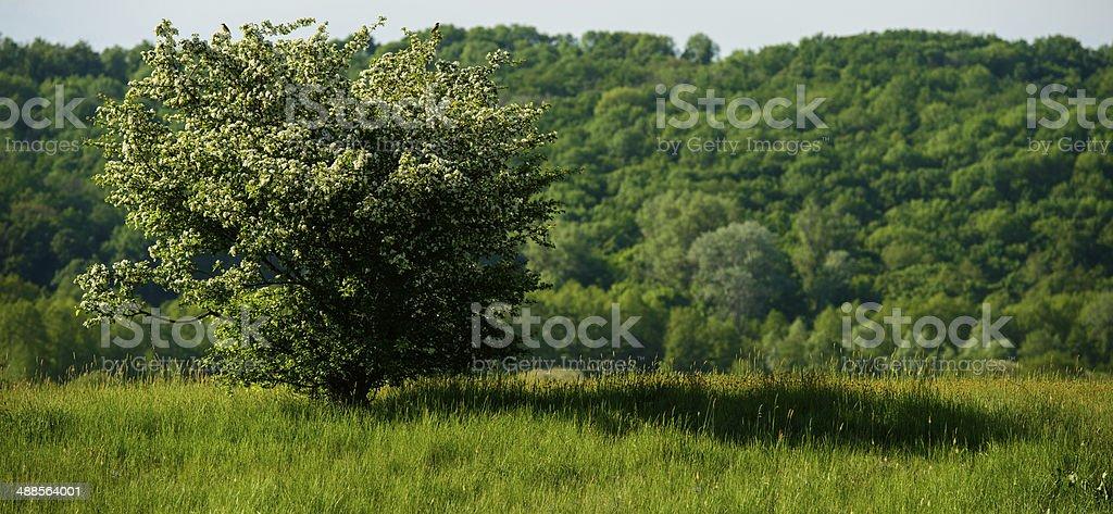 spring motif royalty-free stock photo