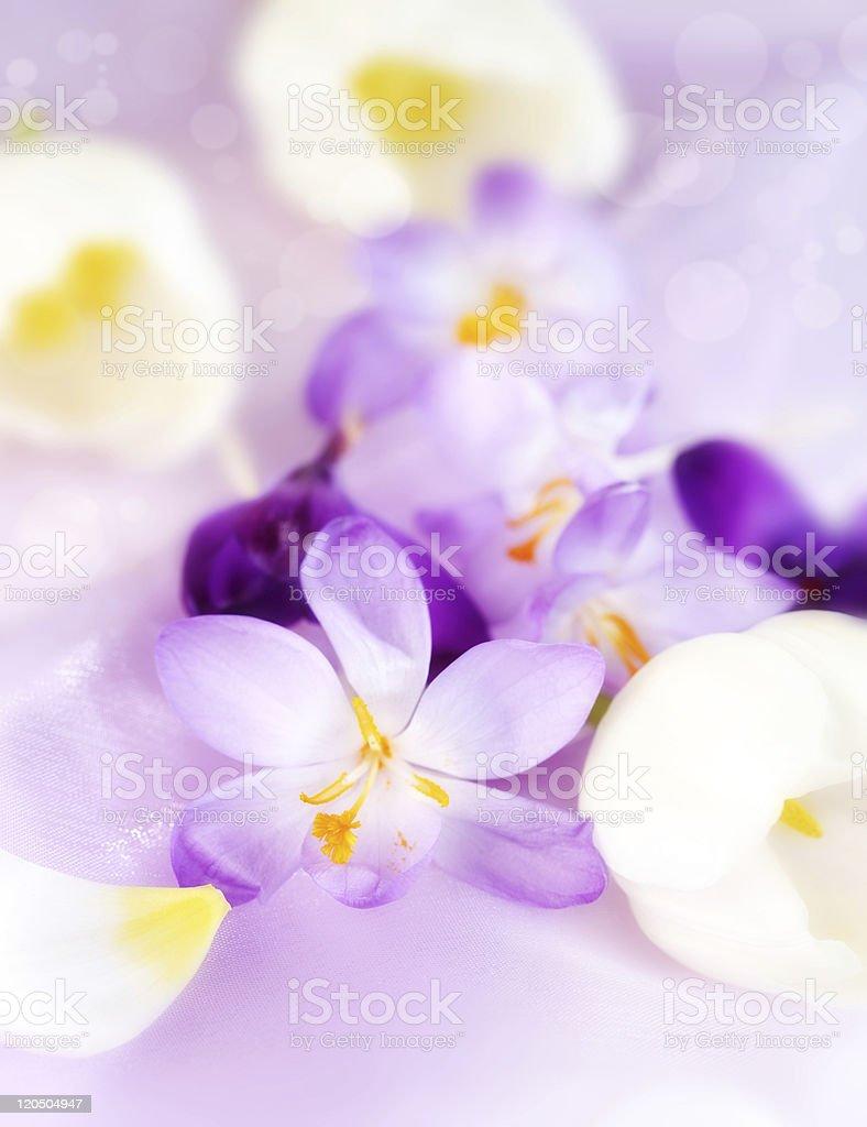 Spring motive royalty-free stock photo