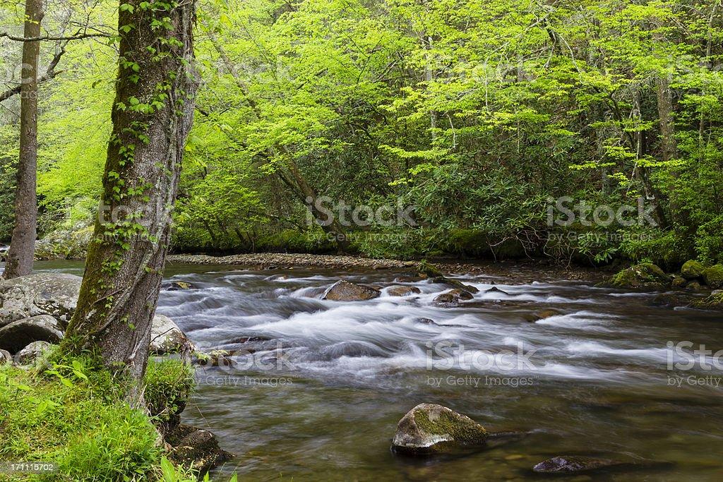 Spring Mountain Stream royalty-free stock photo