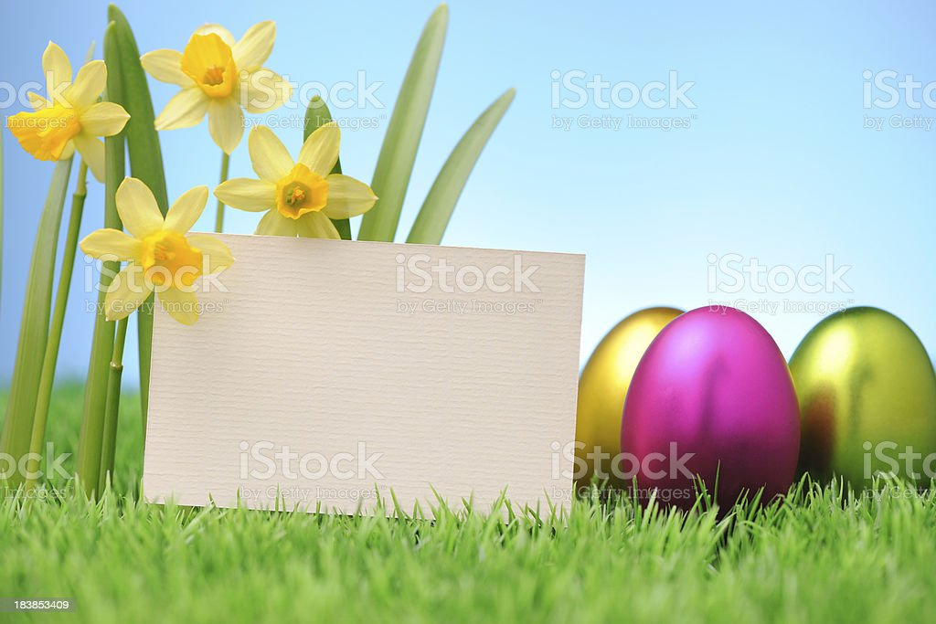 Spring narcissus royalty-free stock photo