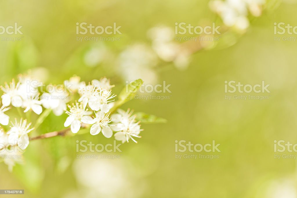 Spring Nature royalty-free stock photo