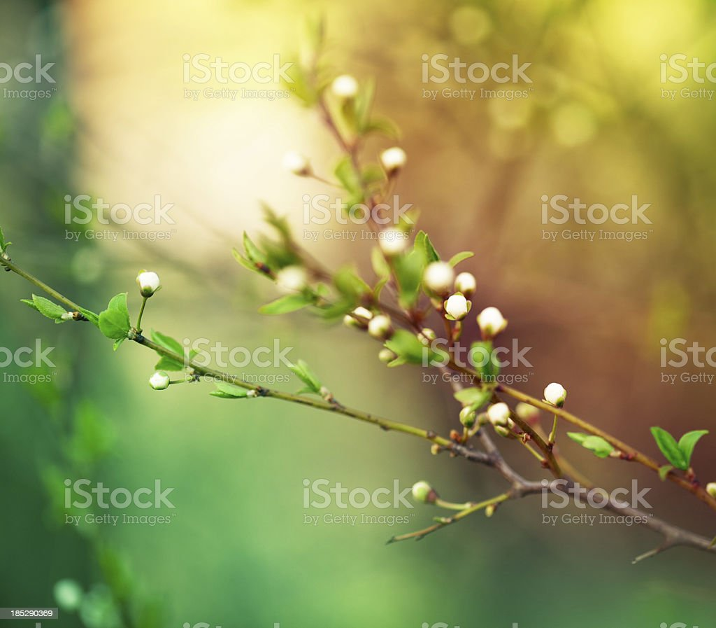 Spring nature stock photo
