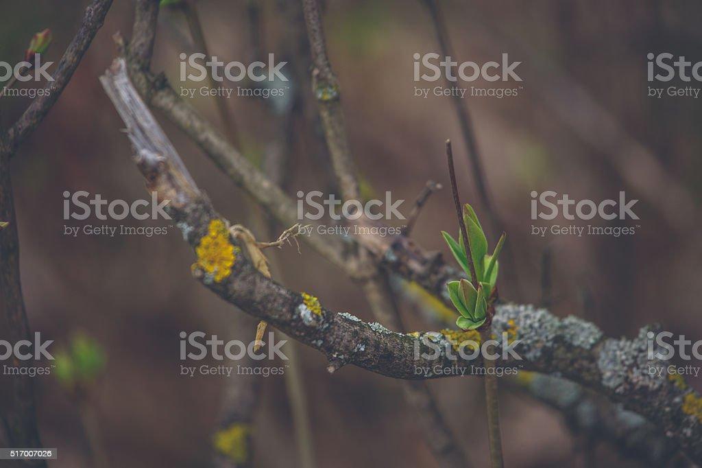 Spring Nature stock photo