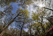 Spring, Oak Woodland, a Fish-eye view