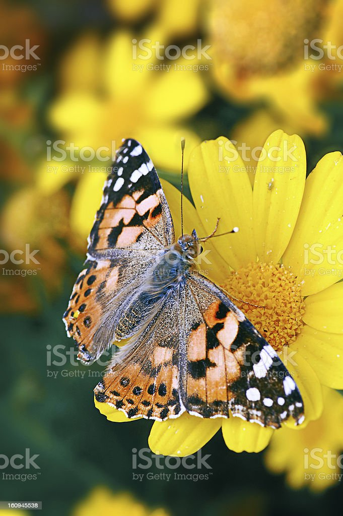 spring of colors royalty-free stock photo