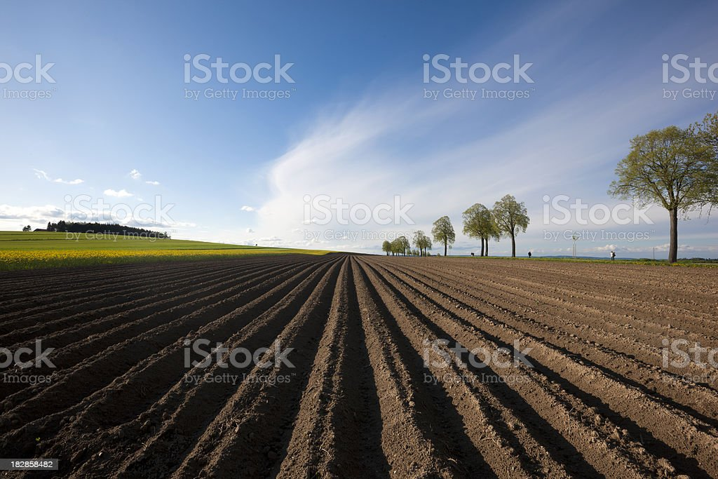 Spring of coutryside stock photo